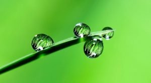 Picture is of green leaf reflecting other green leafs within some water droplets.
